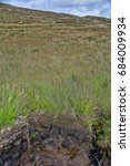 Small photo of Peat bog in Ireland