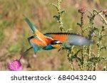 european bee eater  merops... | Shutterstock . vector #684043240