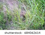 rabbit on the path in the park   Shutterstock . vector #684062614