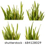 green grass lawn isolated on... | Shutterstock . vector #684128029
