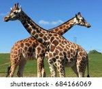 fota wildlife park  co. cork ... | Shutterstock . vector #684166069