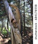 tree split after struck by... | Shutterstock . vector #684178558