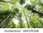 dense rainforest. nature...   Shutterstock . vector #684190108