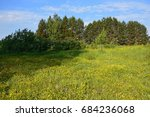 Lush Meadow With Yellow...
