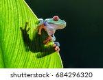 frog red eyed amazon tree frog  ...   Shutterstock . vector #684296320