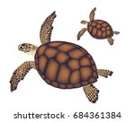Two Sea Brown Turtle On White...