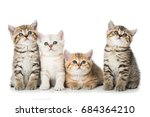 Stock photo four british short hair kitten 684364210