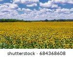 blooming sunflower field... | Shutterstock . vector #684368608