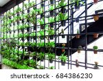 green vertical garden. the... | Shutterstock . vector #684386230