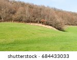 Leafless Tree On A Hillside At...