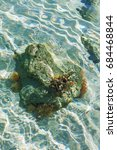 Small photo of Actinia are sitting on a rock in the sea. Seabed through crystal clear water. marine blur background, rocky seabed through clear water.