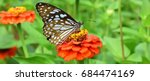 Butterfly Eat Nectar From...