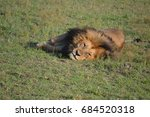Lion Sleeping In Maasai Mara ...