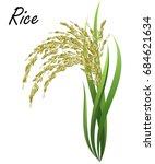 rice  oryza sativa  asian rice .... | Shutterstock .eps vector #684621634