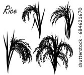 rice  oryza sativa  asian rice .... | Shutterstock .eps vector #684621670