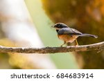 Small photo of Black throated Bushtit (Aegithalos concinnus) with prey, feeding the chick