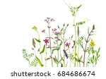watercolor drawing wild plants... | Shutterstock . vector #684686674