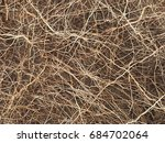 close up shot of roots in soil | Shutterstock . vector #684702064