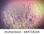 butterfly on lavender flower  ... | Shutterstock . vector #684718264