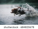 border collie runs in the water | Shutterstock . vector #684820678