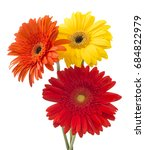 Bouquet of flowers gerberas isolated on white background - stock photo
