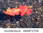 Two Red Maple Leaves In Fall...