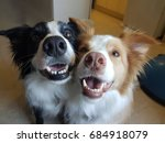 two dogs smile | Shutterstock . vector #684918079
