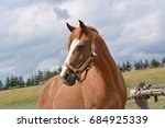 Stock photo head horse 684925339