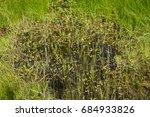 grassy marshland with standing...   Shutterstock . vector #684933826