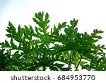 papaya leaves | Shutterstock . vector #684953770