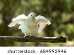 white dove in the forest on a... | Shutterstock . vector #684993946