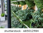 a pot of green plant decorative ... | Shutterstock . vector #685012984