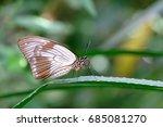 Small photo of Female African Swallowtail, Mocker Swallowtail or Flying Handkerchief, papilio dardanus, Mainau Island, Germany