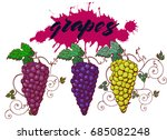 grapes bunch of grapes freehand ... | Shutterstock .eps vector #685082248