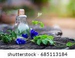 butterfly blue pea flower in... | Shutterstock . vector #685113184