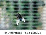 Fly On Window Screen  Closeup