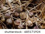 garlic | Shutterstock . vector #685171924