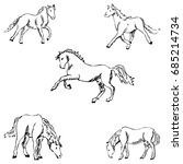 horses. a sketch by hand.... | Shutterstock . vector #685214734