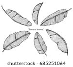 banana leaves by hand drawing... | Shutterstock .eps vector #685251064