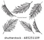 coconut palm leaves by hand... | Shutterstock .eps vector #685251109