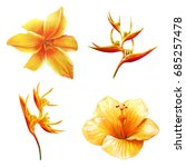 yellow exotic flowers drawing | Shutterstock . vector #685257478