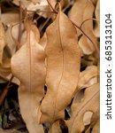 Small photo of Close up dry Eucalyptus leaf. Close up textured of Eucalyptus tree. (Eucalyptus globulus Labill.)