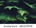 background with trees | Shutterstock . vector #685325998