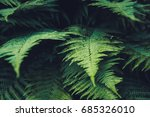 background with trees | Shutterstock . vector #685326010