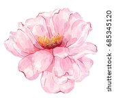 watercolor hand painted flower... | Shutterstock . vector #685345120