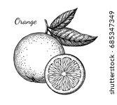 ink sketch of orange. isolated... | Shutterstock .eps vector #685347349
