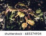 texture of plants in summer | Shutterstock . vector #685374934