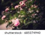 texture of plants in summer | Shutterstock . vector #685374940