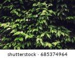texture of plants in summer | Shutterstock . vector #685374964
