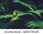 texture of plants in summer | Shutterstock . vector #685375030